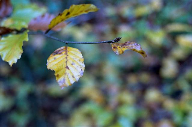 FILM - Autumn leaves