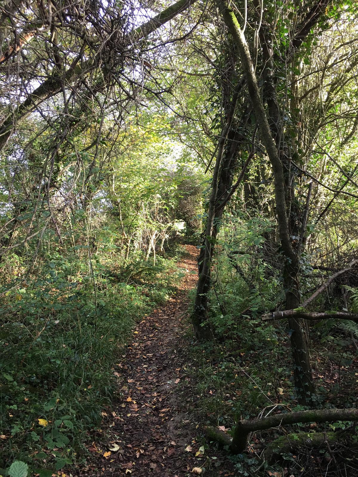 7 Ashurst Circular Walk