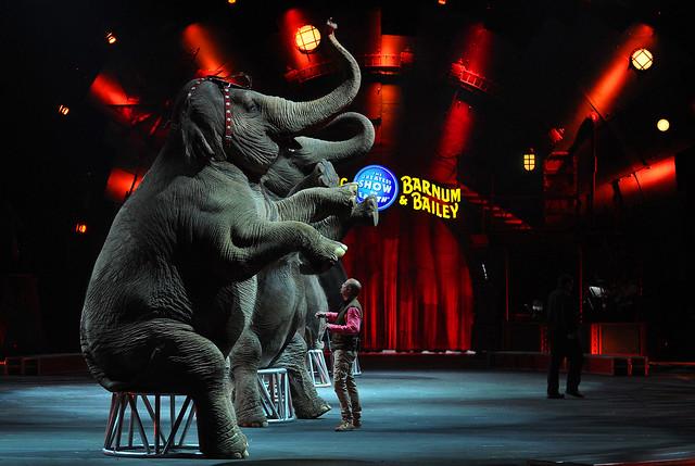 Final Elephant show for Ringling Bros. and Barnum Circus (Very Sad)
