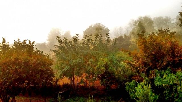 mattino nebbioso (