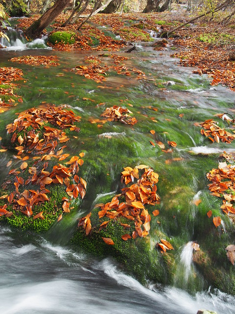 clear stream, mosses and fallen leaves