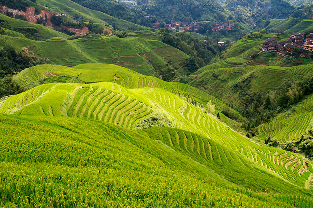 rice terrace - 10