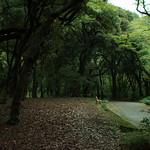 Shinjuku Gyoen Park (1 of 1)