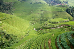 rice terrace - 3