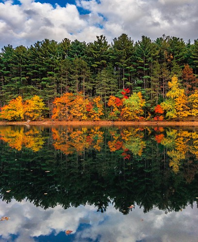 reflections nature massachusetts newengland tree trees autumn fall foliage winchester colorful boston