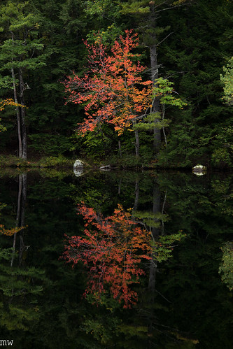 tree foliage sunsetlake gilmanton newhampshire newengland 70200mm 6d fall autumn