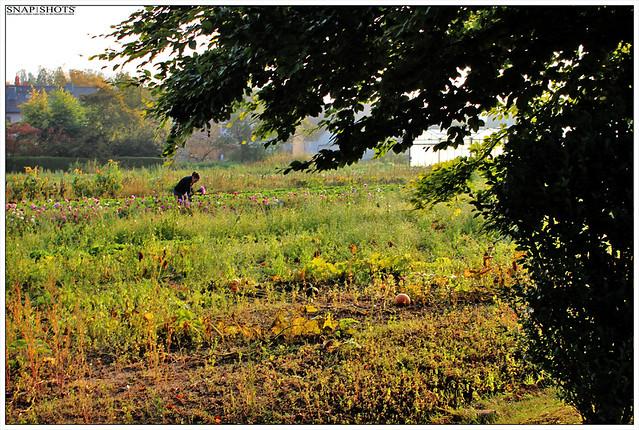 Kürbis und  Blumenfrau am Morgen