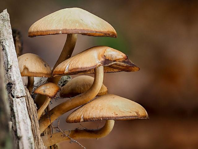 Mushrooms | Pilze