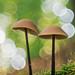 Mushroom Bokeh by Michal Jeska