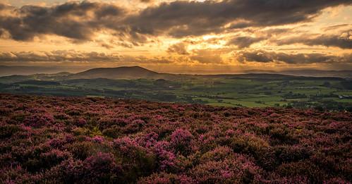 sunset sun vista d750 landscape britain heather purple stiperstones shropshire sky sunlight hills panorama uk clouds