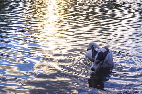 El perro del agua | by Wal Wsg