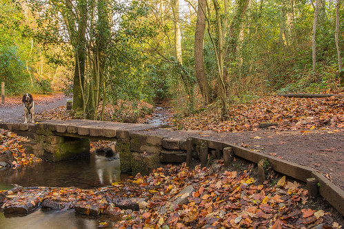 leasowsepark halesowen dudley westmidlands england uk autumn 2017 dog animal bridge path stream brook water woodlands woods park nature autumncolour leaves trees tree plant green outdoor landscape colour fall nikon d7100 sigma1835f18art beauty peacefull wood forest