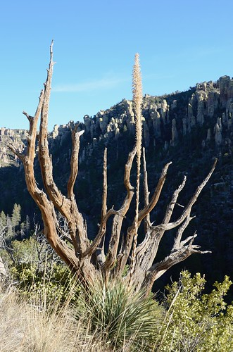 Chiricahua National Monument plants that were beautiful | by Pierre Yeremian