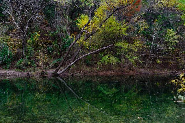 Yellows and Greens of Bull Creek