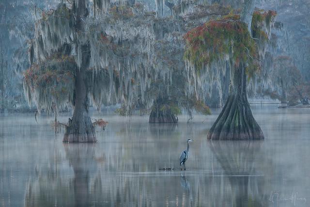 Heron's Landing