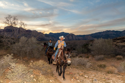america cowboytrailrides horsebackriding lasvegas mojavedesert nevada places redrockcanyon usa vegas nearlasvegas redrock sunset