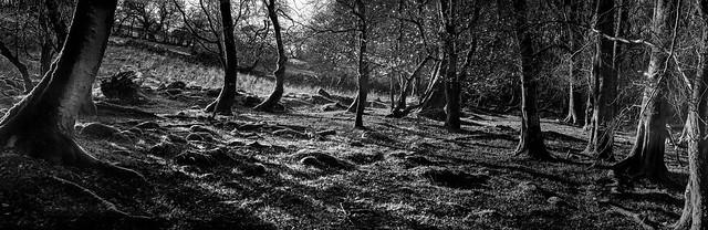 Llangatock Treescape .jpg