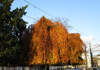 Herbstliche Bäume in Pankow | by Grüner Nomade