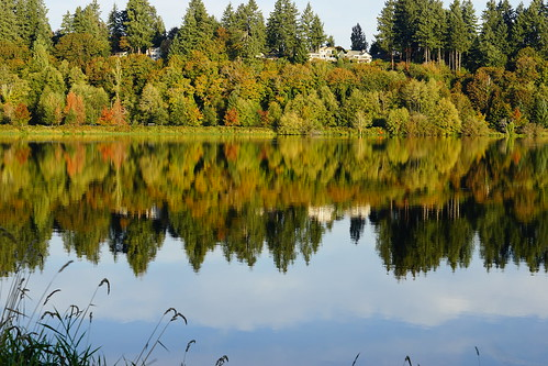 autumn capitollake washington olympia reflection
