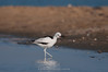 Crab plover by Ramakrishnan R - my experiments with light