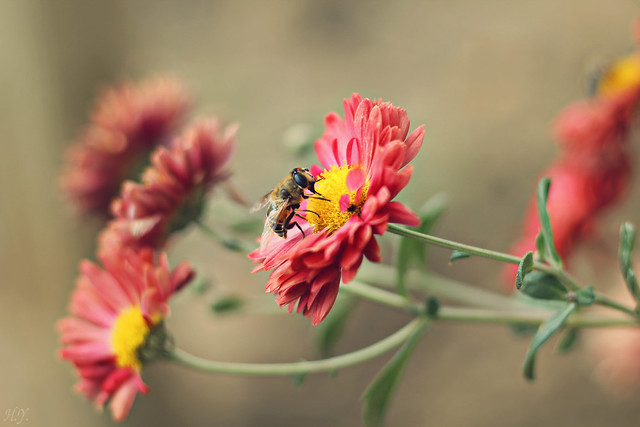 Flowers and bee...