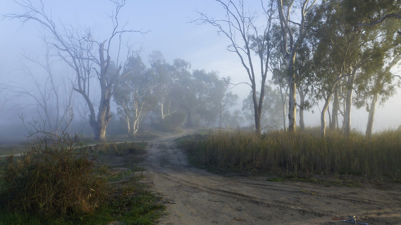 Early morning mist along the Murray near Morgan, SA