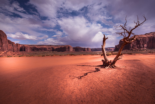 Lonely tree in Monument Valley - Navajo County - Arizona - USA