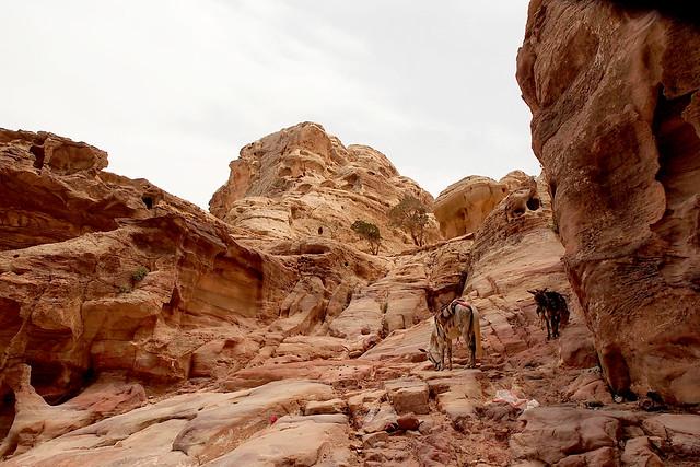 Petra, Jordan (3)
