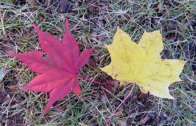 RED & YELLOW LEAVES.....