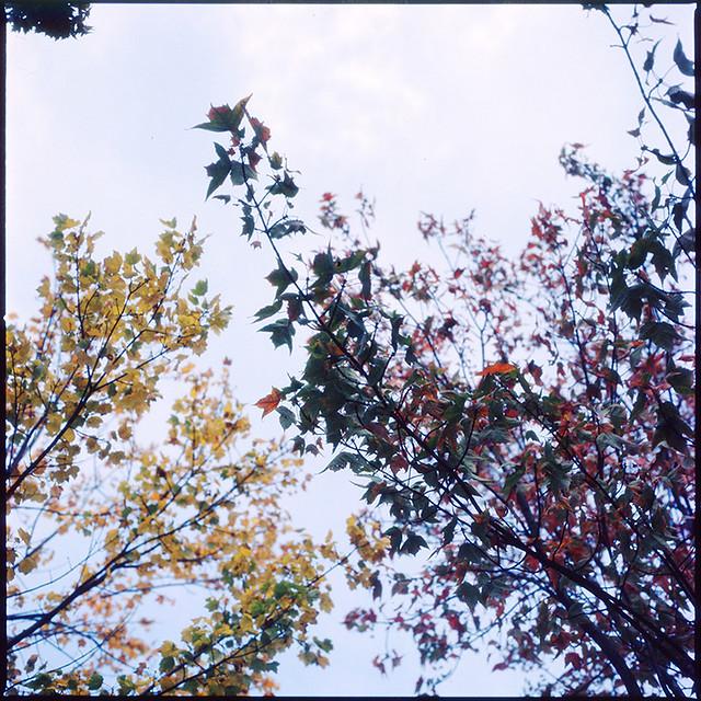 Leaves grow old