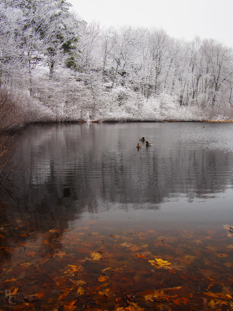 Autumn Meets Winter in a Springtime Pond