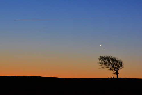 cleevehill cleevecommon conjonction conjunction venus jupiter astrophoto astro astronomy morning early horizon minimalist tree silhouette gloucestershire uk celestial encounter planets planètes