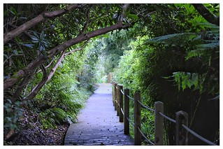 Eastern Drive, Lost Gardens of Heligan | by Matthew.P.Wright