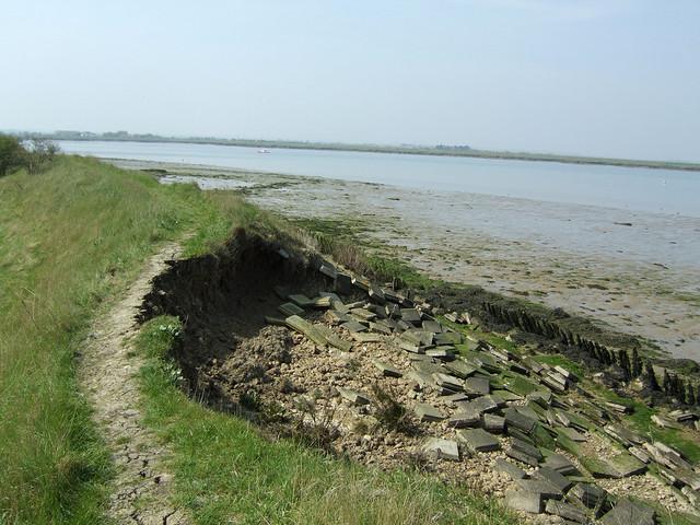 Sea wall erosion near Maylandsea