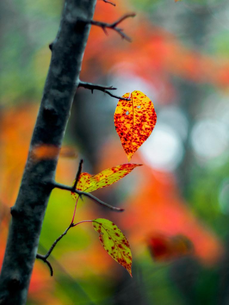 October Palette