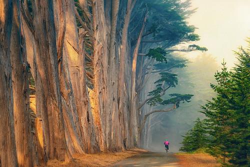 mossbeach california fitzgeraldmarinereserve connieswoods fog mist cypresstrees bicylist pink landscape sunrise