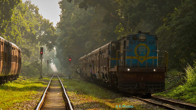 The Threatened Forest Train Of Mala