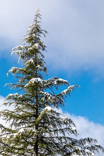 georgia snow sugarhill trees