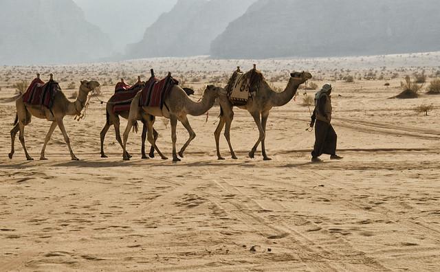 Jordan:  Bedouin With Camels