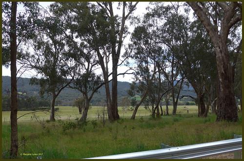 victoria australia swanpooltoeildon roadside scenery