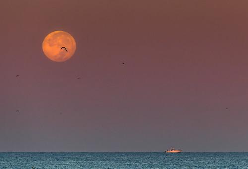 full moon lunar phase early morning sunrise dawn fishing boat horizon longboat key florida gulf coast gulls marine birds silhouette people