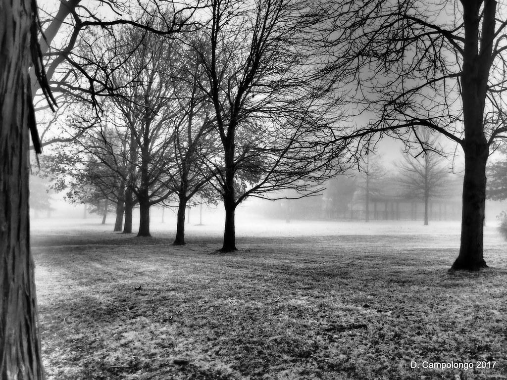 Fog 7 BW