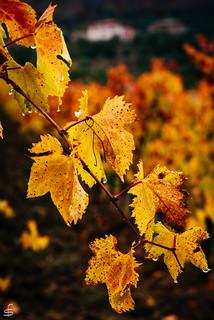 Autumn in between yellow and orange