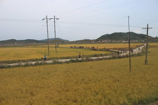 People working on the fields in North Korea | by Timon91