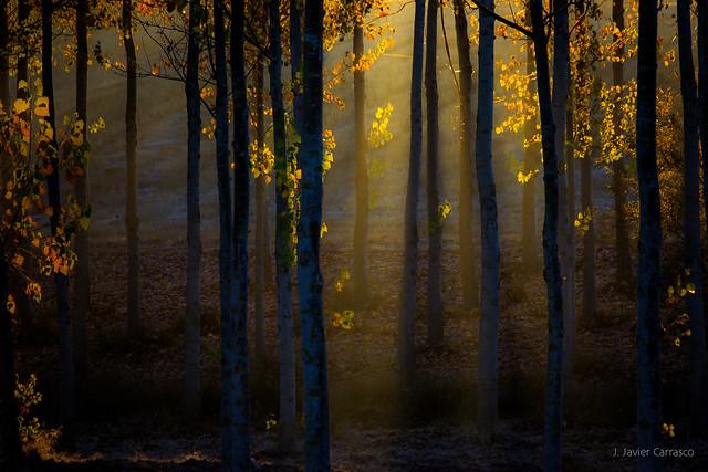 Hadas de otoño