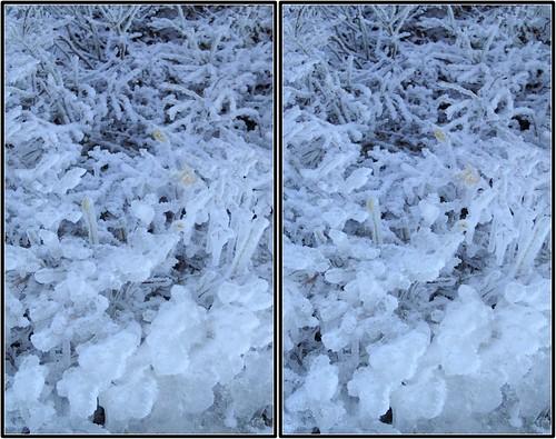 bushes crosseye ice stereo tremblant
