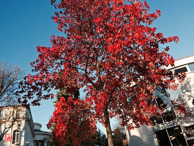 Des belles feuilles devant la bibliothèque....