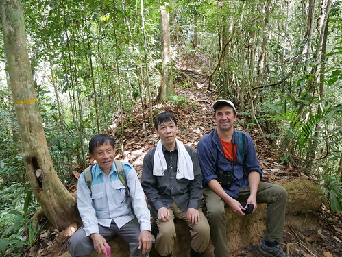 Fri, 12/01/2017 - 22:03 - Pictured from left to right: Sylvester Tan, Akira Itoh and Stuart Davies, the three PIs of the Lambir plot in Sarawak, Borneo