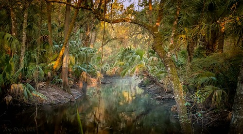 nature tropical tropicaljungle river trees water sunrise beauty naturesbeauty natiralbeauty inspirational serenity calm light illumination colors