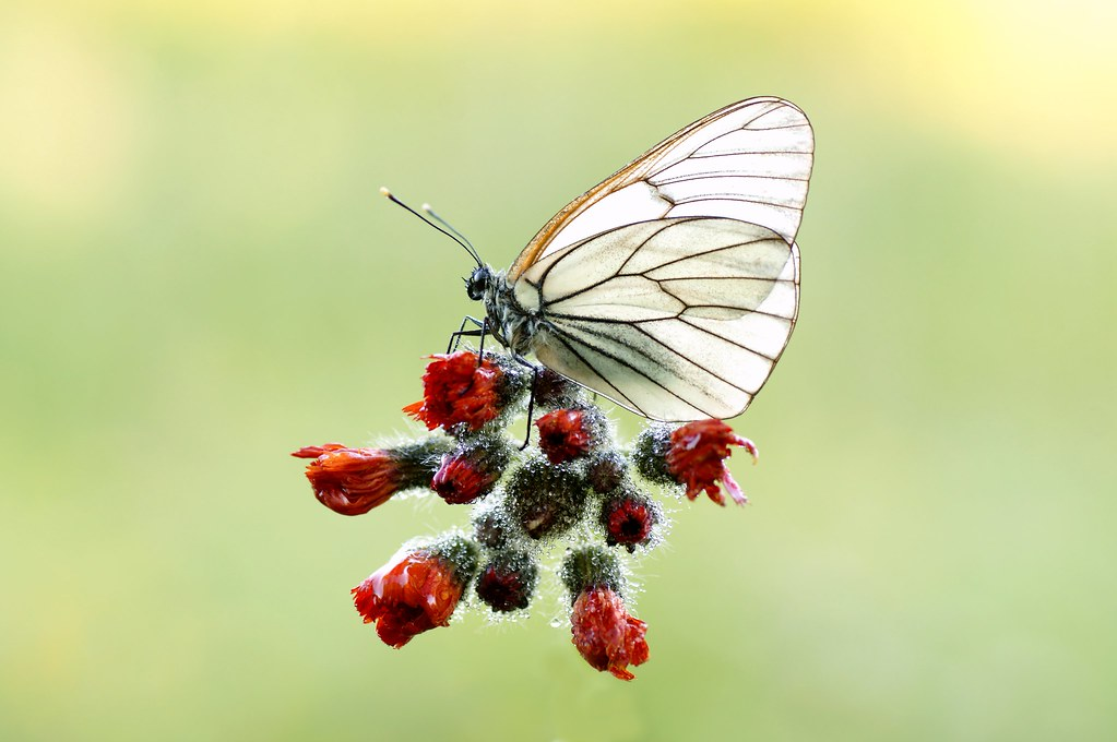 Butterfly christ I Can